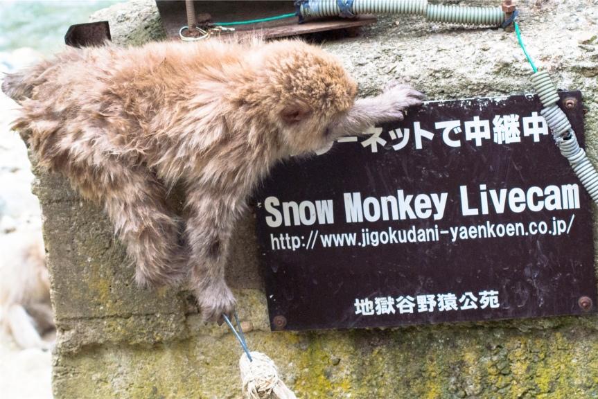 Jigokudani Wild Monkey Park, Nagano;Japan
