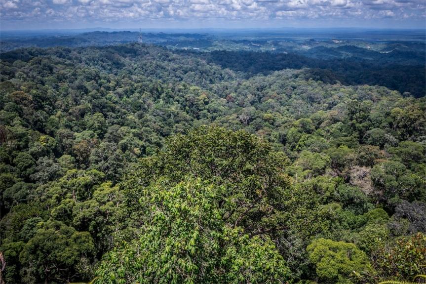 Lambir Hills NP, Borneo; May2017