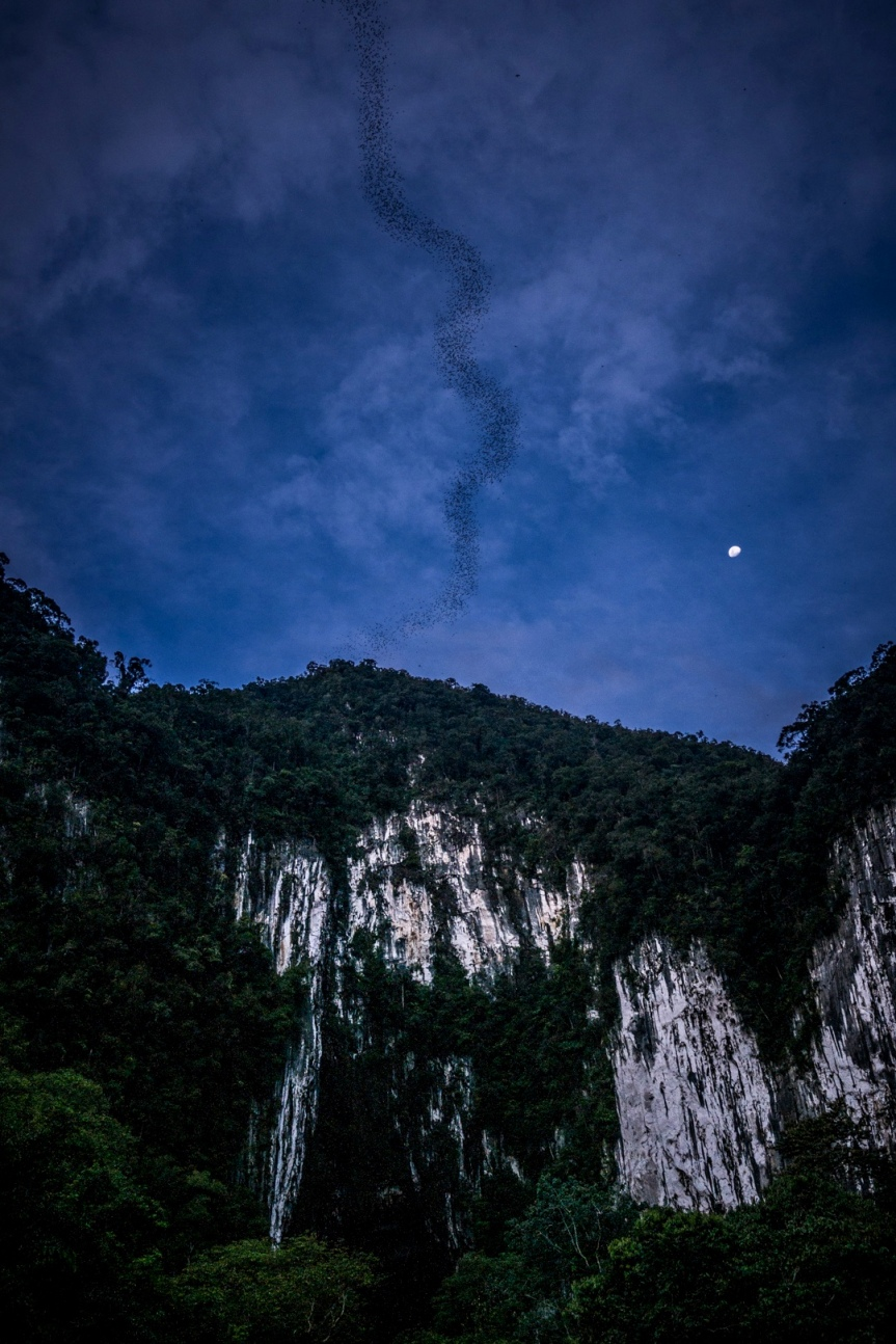 Mulu National Park, Borneo; May 2017